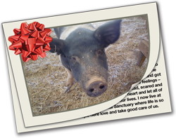 Love is sponsoring a rescued farm animal!